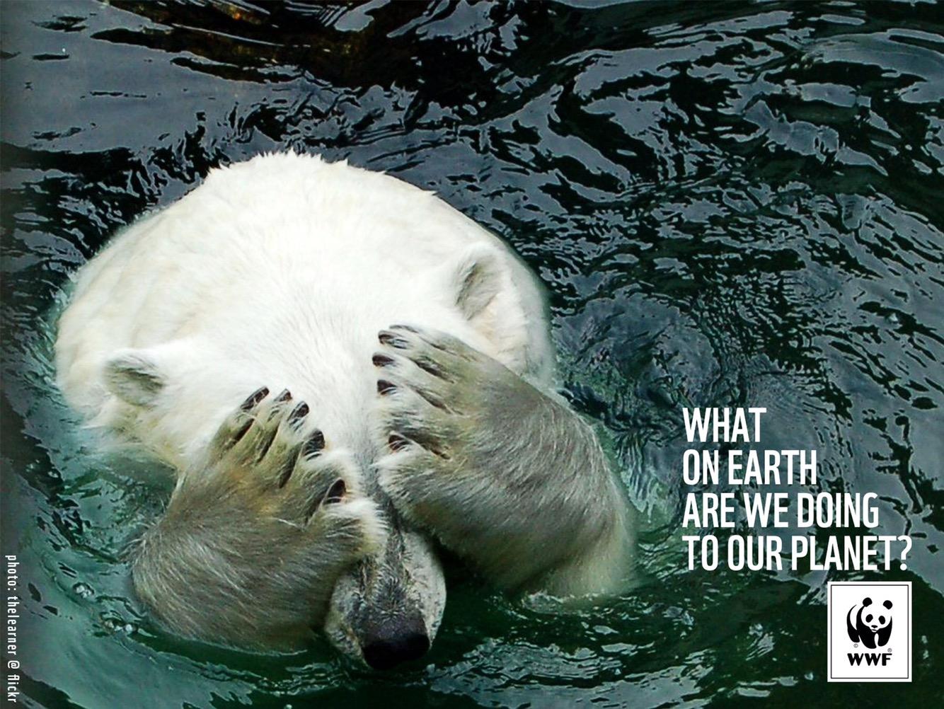 Réagissons ! La sixième extinction de masse des animaux s'accélère
