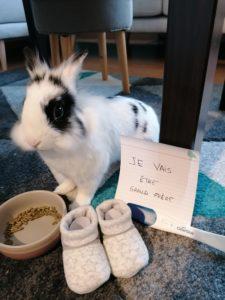 C'est notre lapin nain qui s'est chargé d'annoncer la grossesse à ma mère et à nos amis.